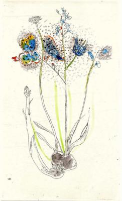 falko behrendt, Blume, Zeichnung und Mischtechnik auf Papier, 2001, 63x35cm